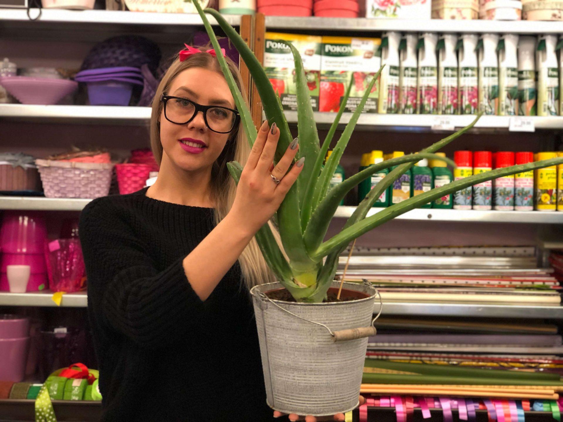 Aloe Vera: Top 5 beneficii pentru piele – Sfaturi de la Floraria Trias