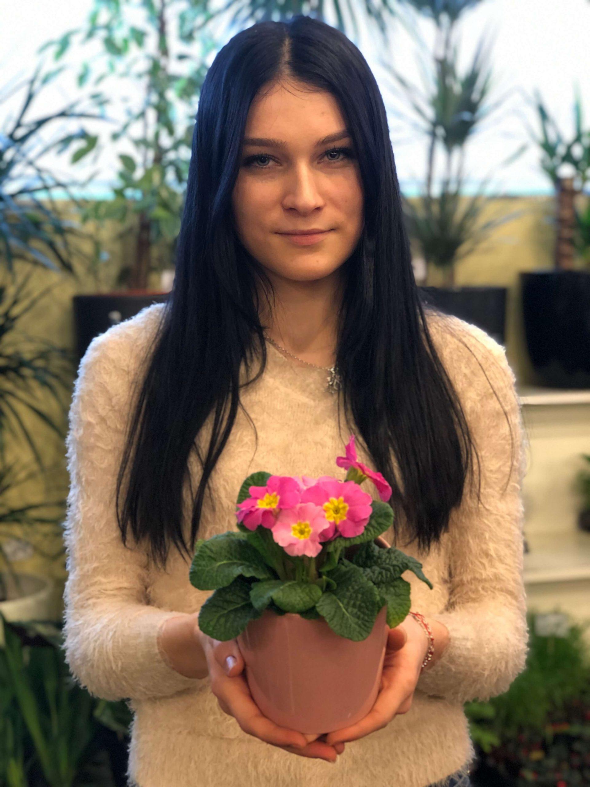 primula cu floare