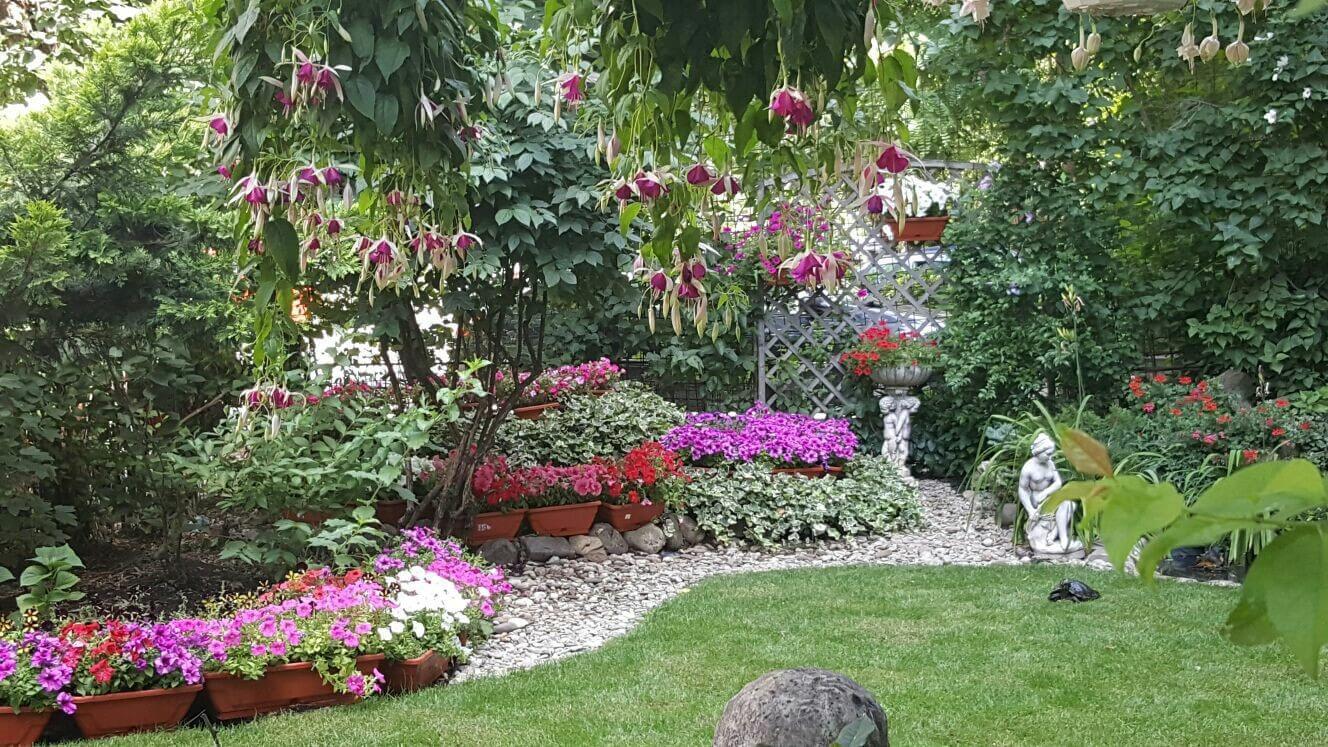 top 5 plante potrivite pentru gradina ta 1