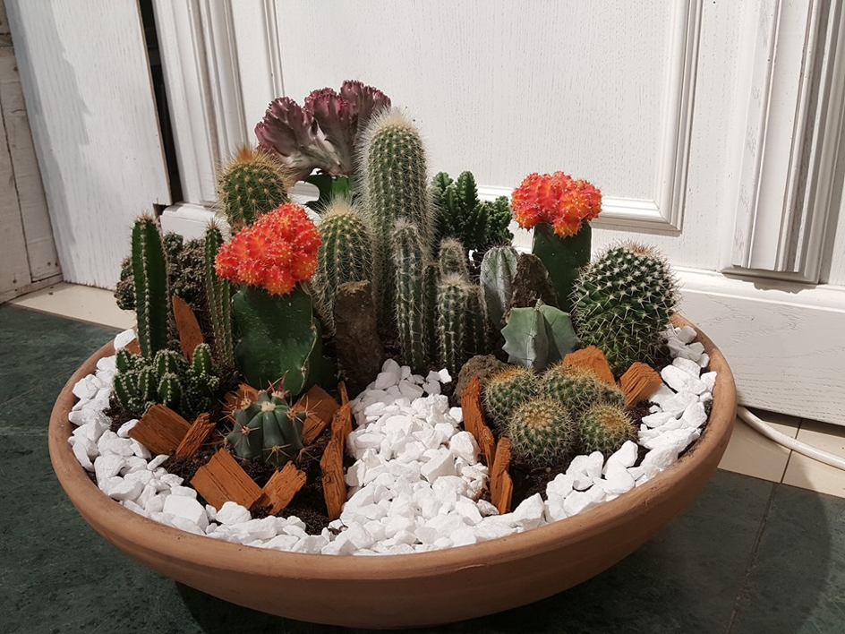 mini gradina cu cactusi