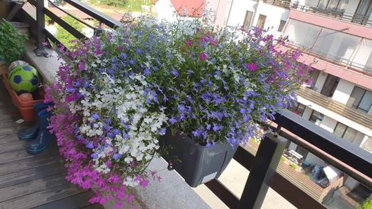 jardiniere santino