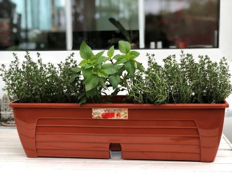 plante aromatice in ghivece cu auto-udare