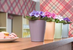 ghivece mici-floraria trias