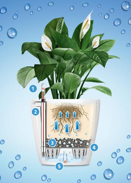 sistem lechuza-floraria trias