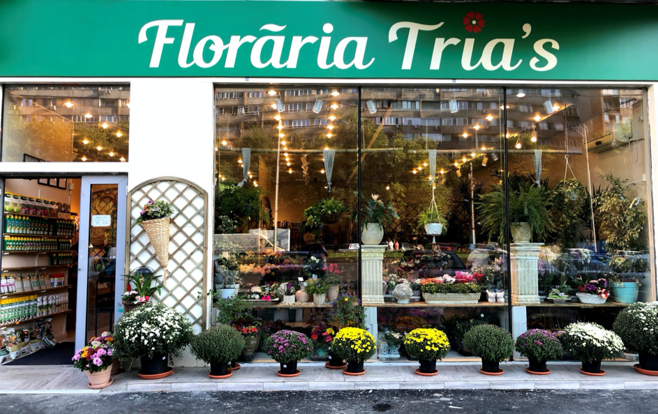 plante de toamna-floraria trias.1