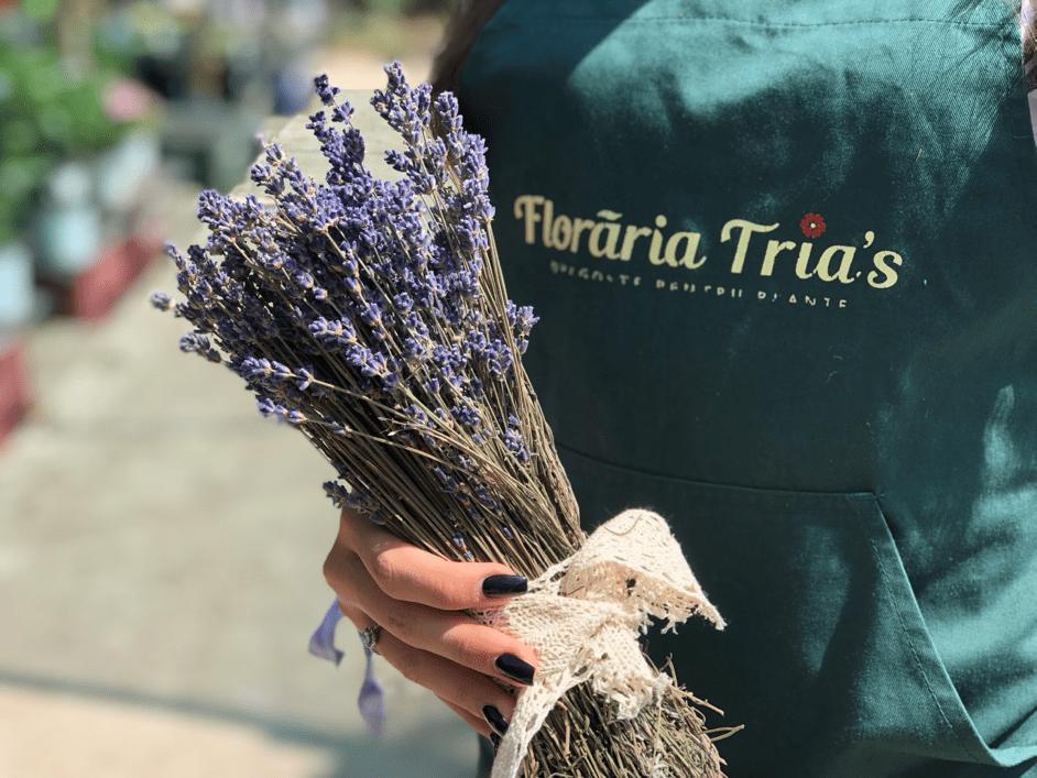 plante aromatice-floraria trias