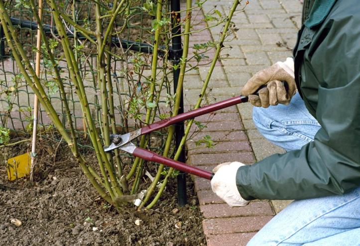 taierea plantelor din gradina se face toamna -floraria trias