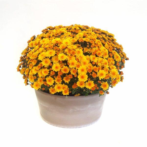 yucca, un accesoriu care decoreaza