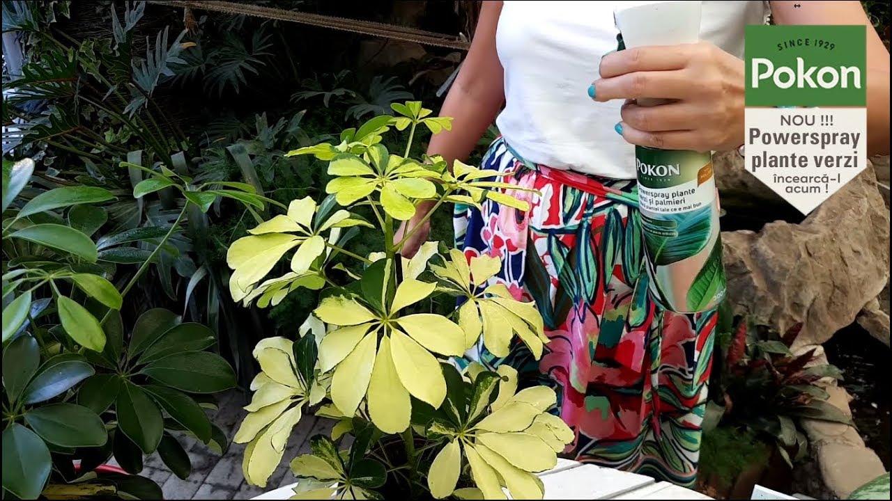Powerspray-plante-verzi-si-palmieri