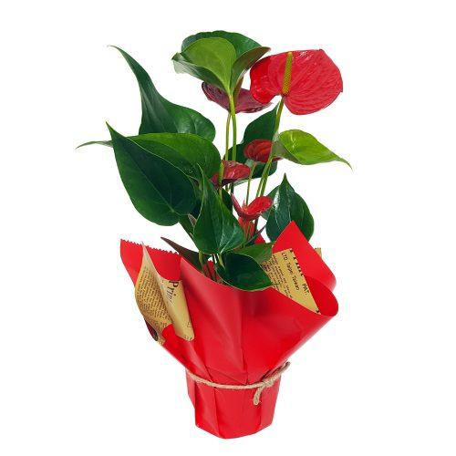 Aranjament din plante nr.4