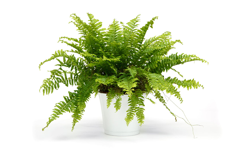 Plante verzi pentru baie