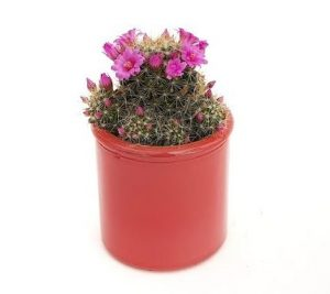 Cactus masca ceramica