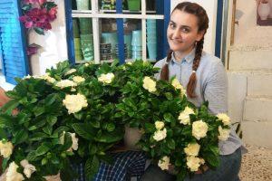 gardenia - floare parfumata