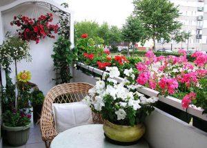plantele potrivite pentru balcon