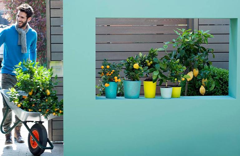 plante-citrice