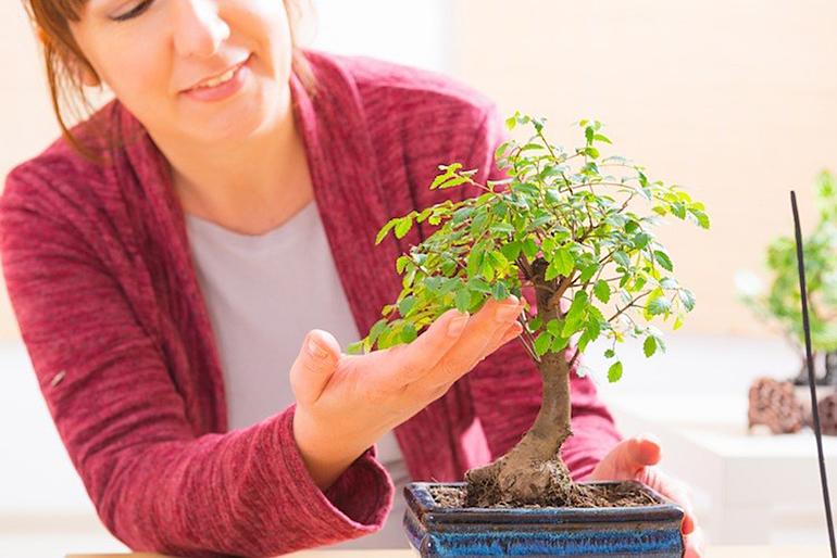 5 sfaturi pentru ingrijirea bonsaiului