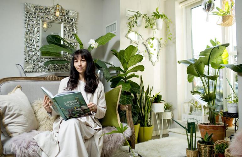 ingrijerirea plantelor de apartament