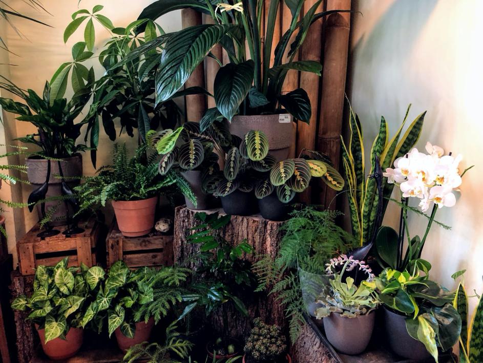 plante usor de intretinut