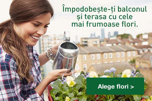 Floraria Trias_banner_site__mobile_600x400pxx_flori balcon