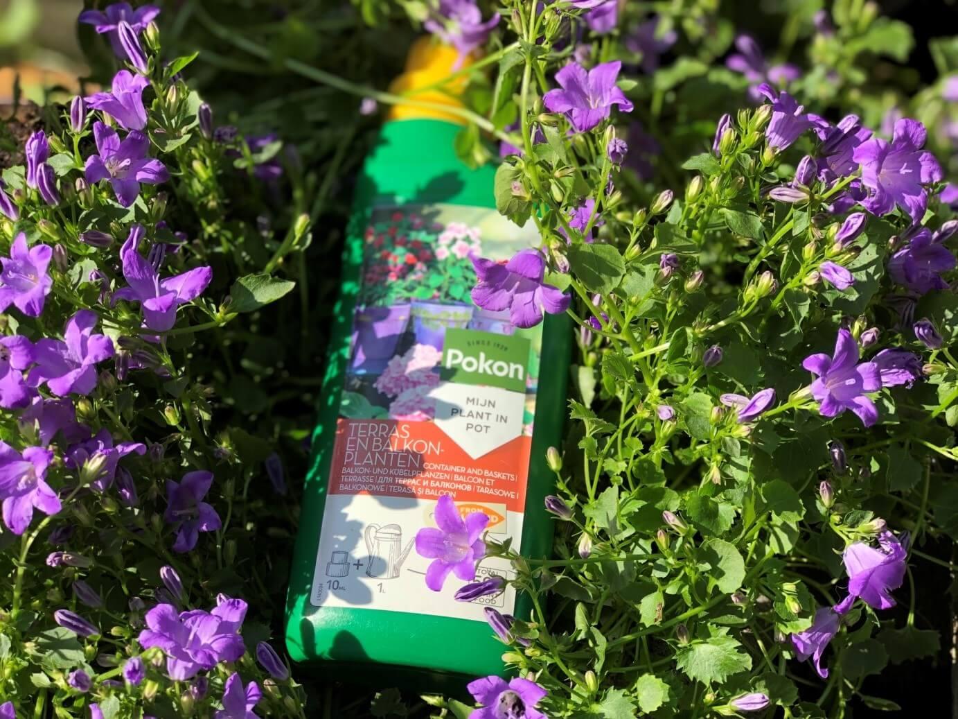 top 5 activitati relaxante pentru casa ta fertilizeaza plantele