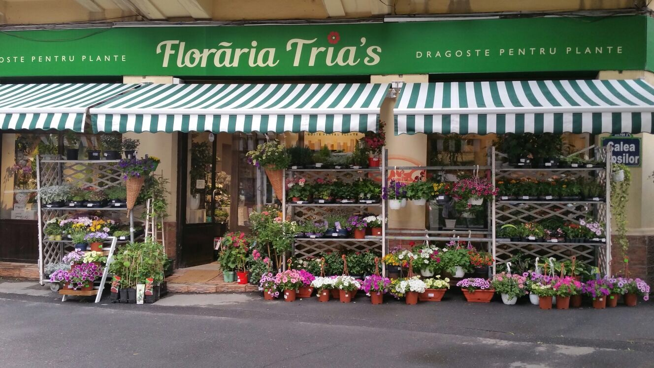 FLORARIA TRIAS CALEA MOSILOR COMANDA FLORI ONLINE