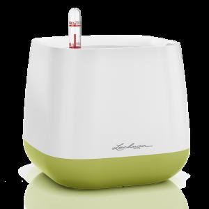 lechuza green-white