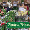 FLORARIA TRIAS PIATA GEMENI – FLORI SI PLANTE SUPERBE, MAI APROAPE DE TINE