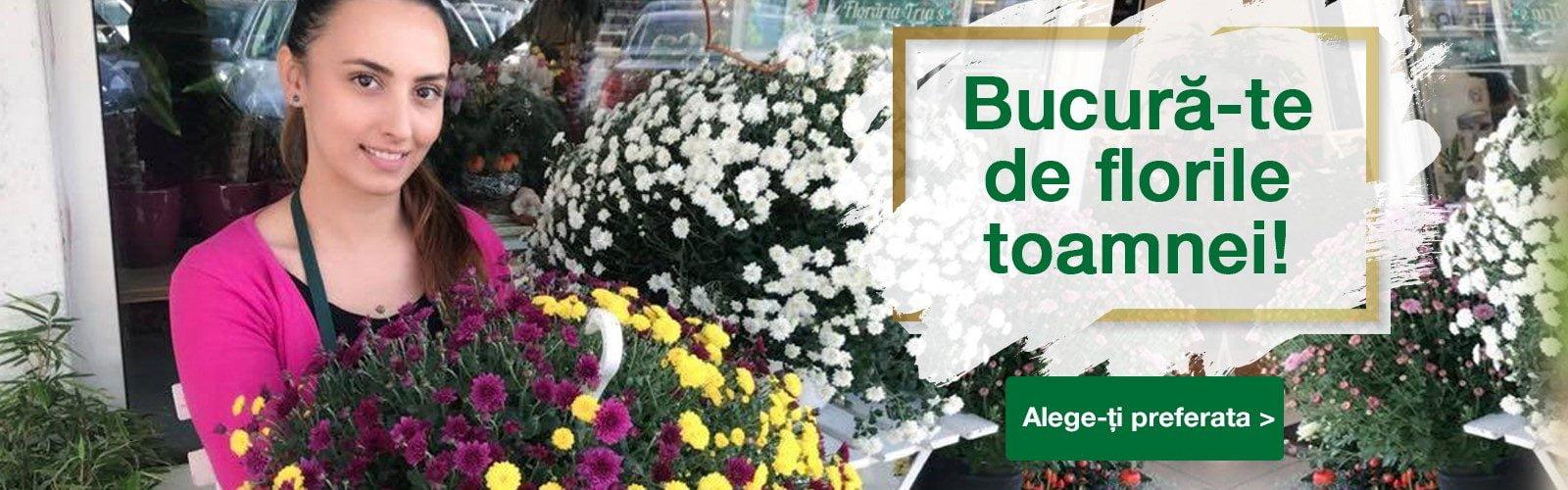 bucura-te de florile toamnei desk