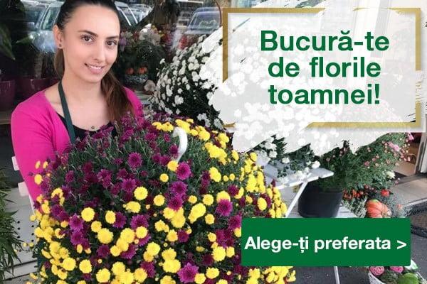 bucura-te de florile toamnei mobile
