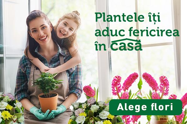 Plantele aduc bucurie_banner_Mobile