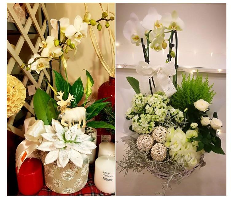 cadoul ideal, aranjament din plante naturale 1