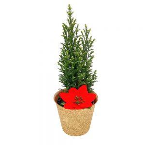 Decor din plante naturale nr.28