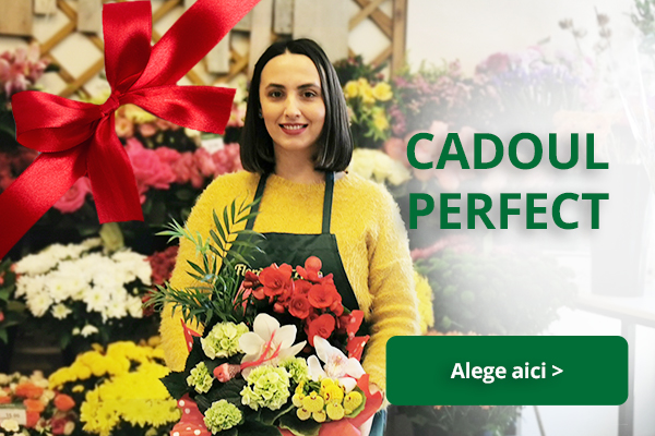 cadoul perfect banner mobile