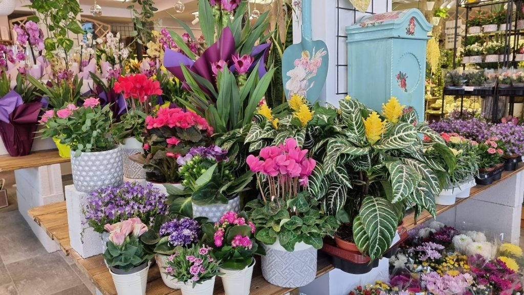 floraria trias timpuri noi 4