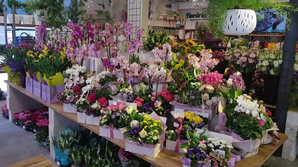 floraria trias timpuri noi 6
