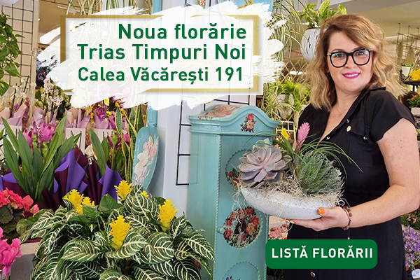 floraria trias timpuri noi banner m