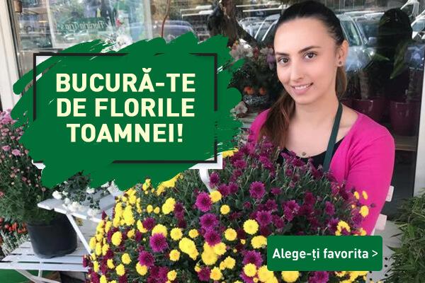 Florile Toamnei FLORARIA TRIAS banner_mobile (1)