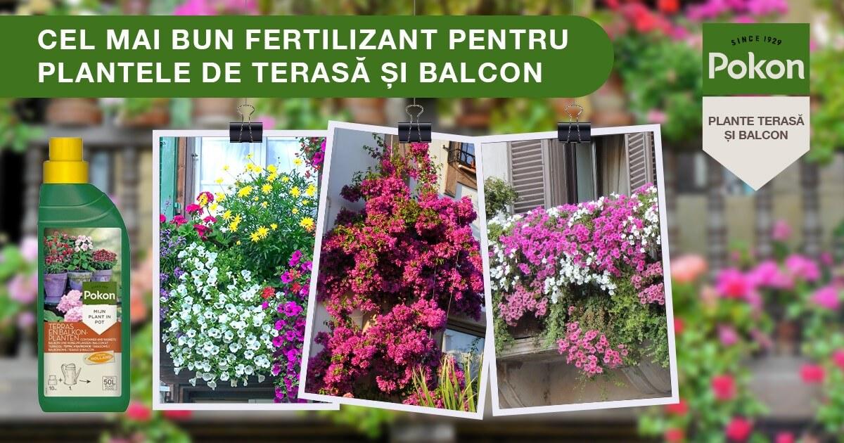 fertilizant terasa si balcon banner 1